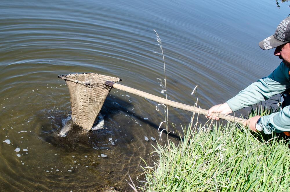 Платная рыбалка фермерское хозяйство